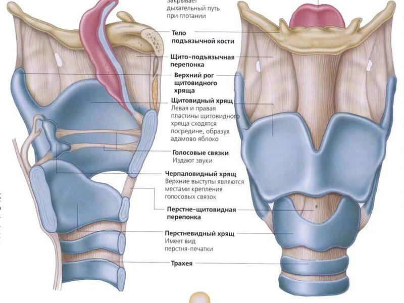 Факторы возникновения хондроперихондрита гортани