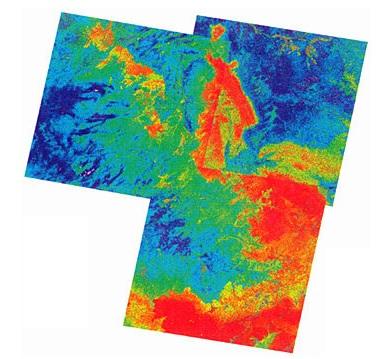 Хантавирус карта