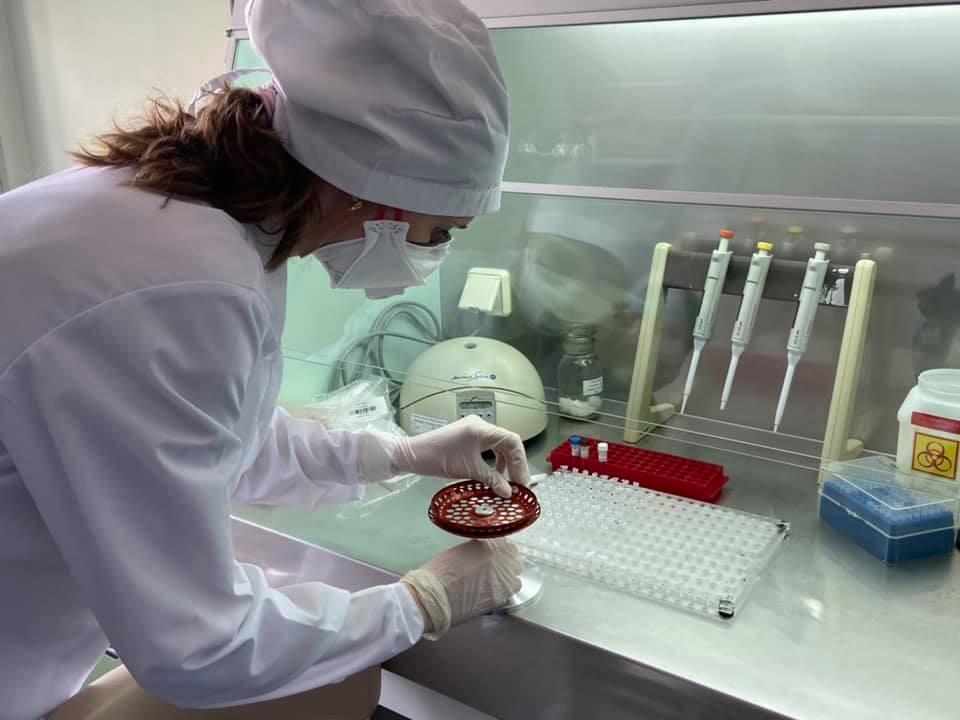 коронавирус в новгороде