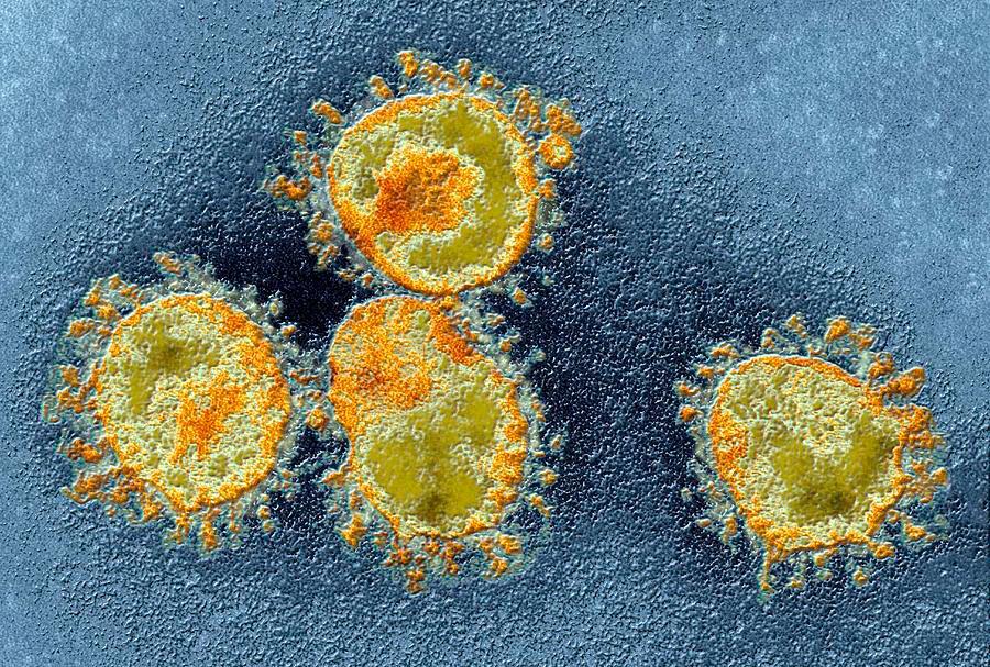 суть коронавируса